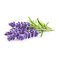 Lavendel Öl: