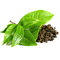 Extrakt Grüner Tee