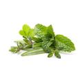 Herbs against Scabies